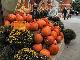 Halloween Kürbis in New York