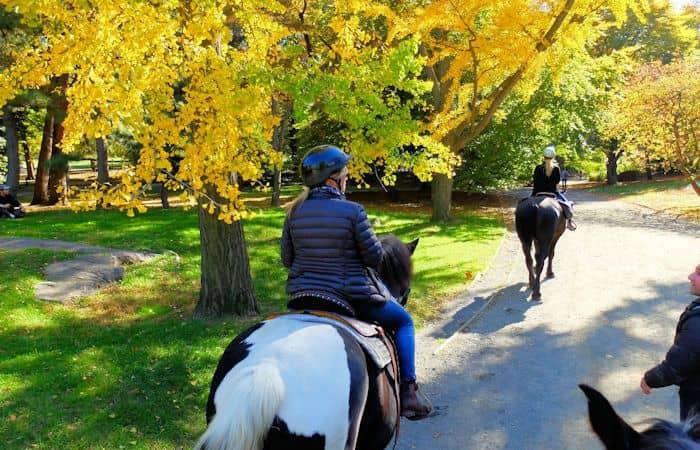 Reiten im Central Park - Reiten